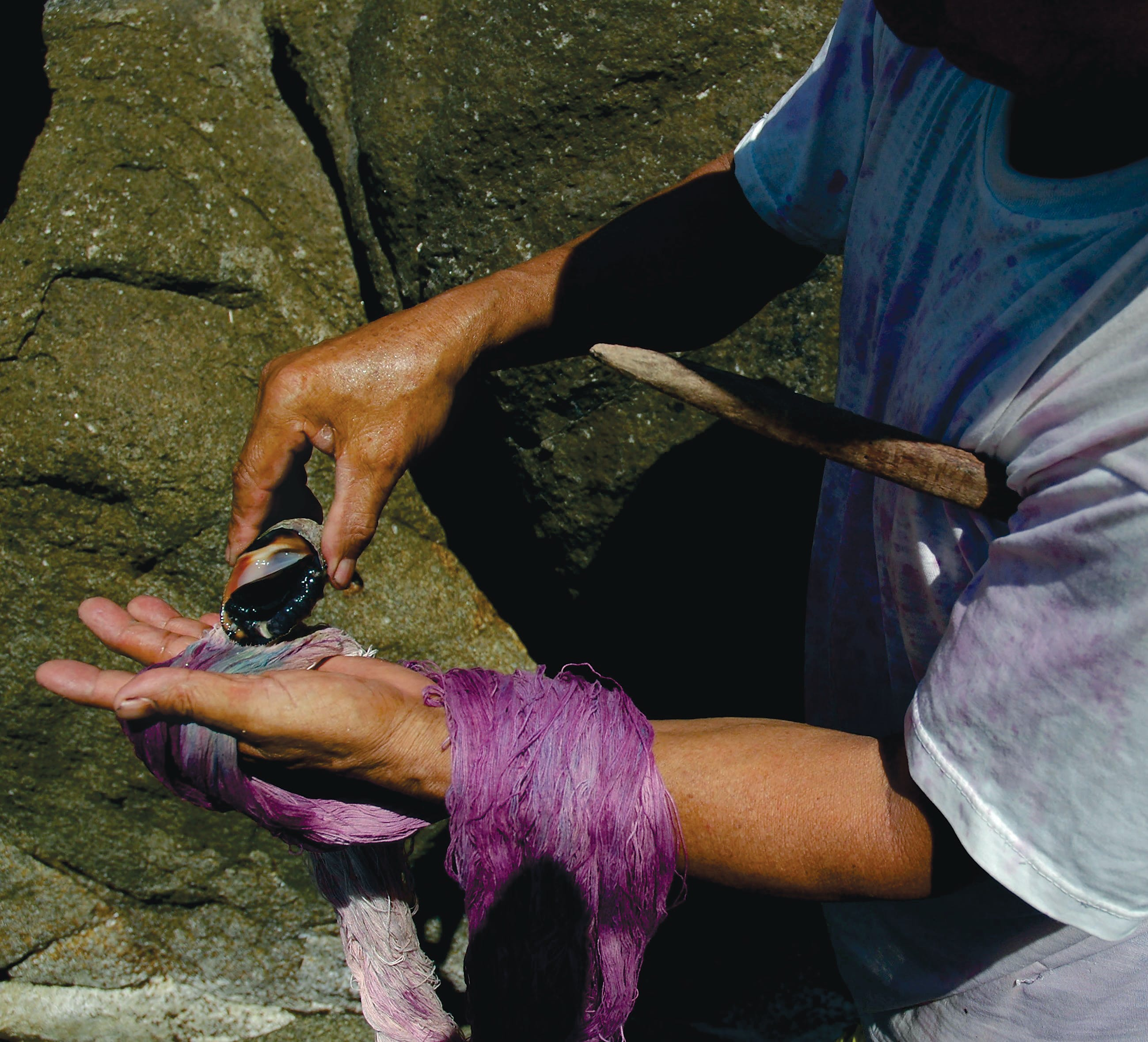 Mixtec dyer milking a sea snails for tixinda