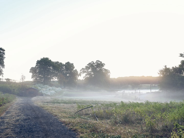 a misty frosty morning on a rural farm