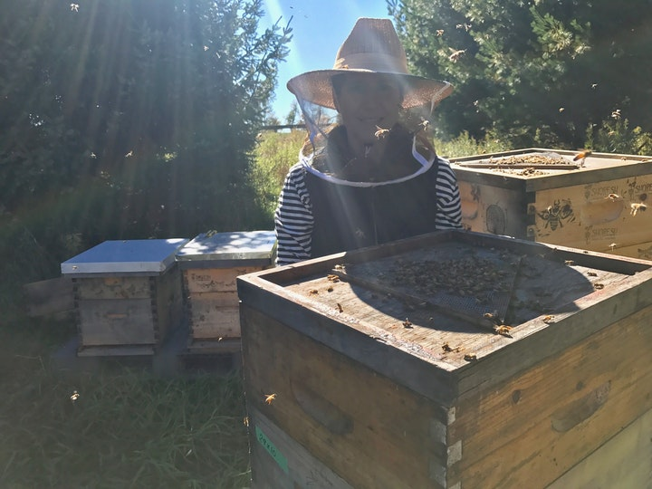 Person wearing beekeeping face net standing in front of hives with bees in frame
