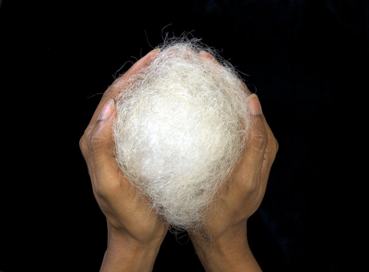 Two hands cupping a ball of white hair