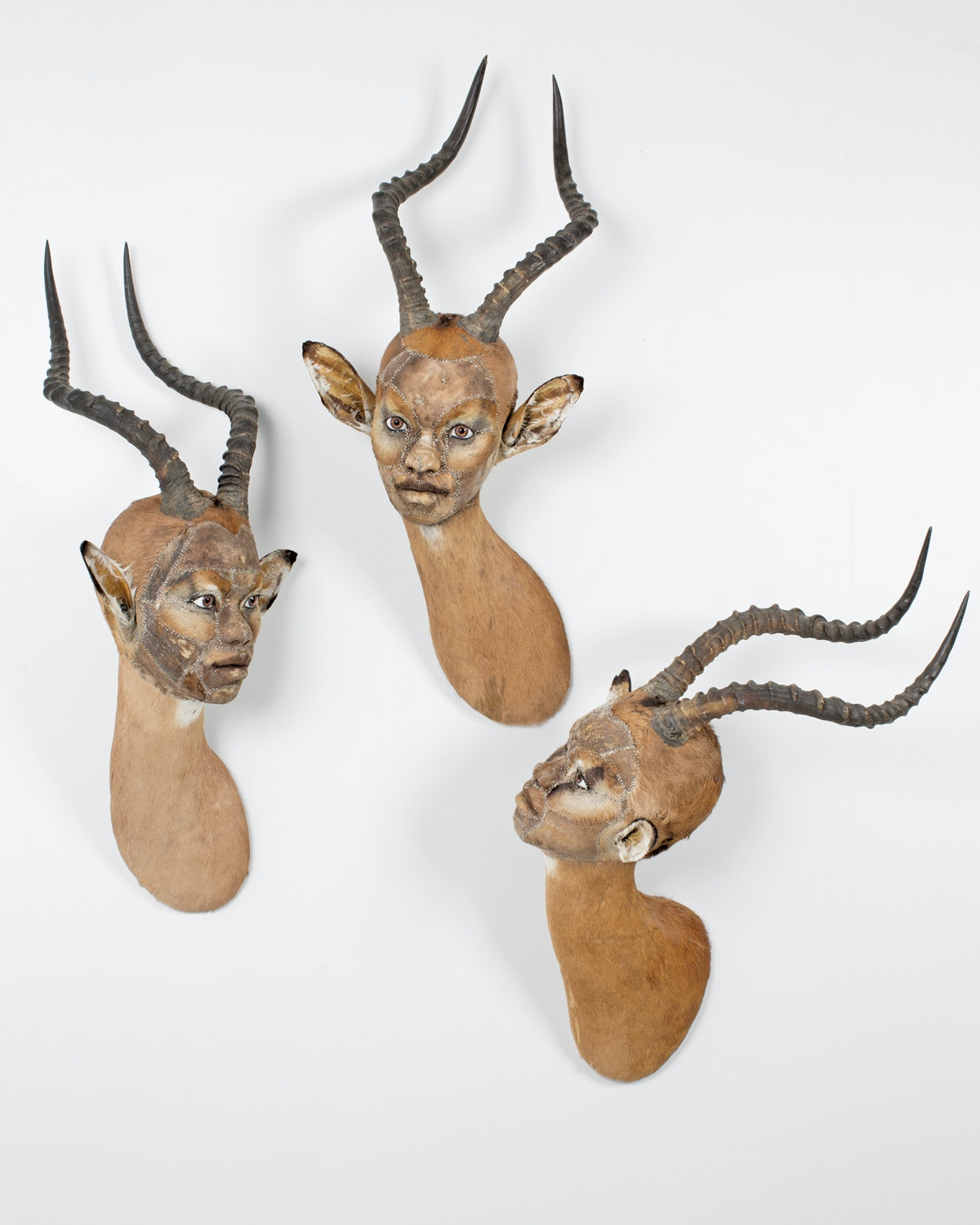 Three wallmounted sculptures that look like taxidermied impala heads except the faces are more like women
